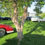 Idyllisk med sol, grønt gress og biler